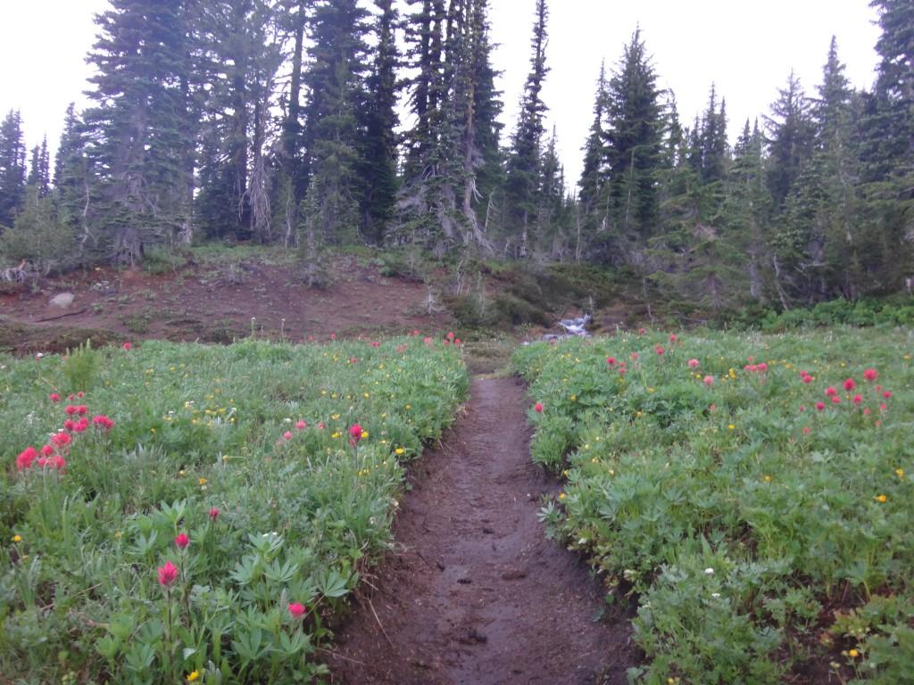 Bird Creek Meadows